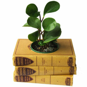 Vintage Book Planter Gift for Readers